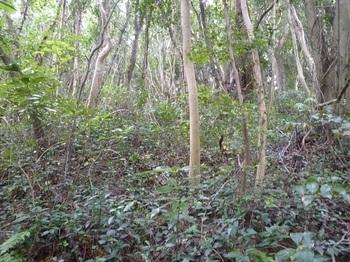 P1190488雑木灌木斜面.JPG