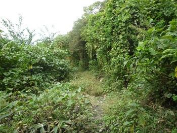 P1190513ツル植物がはびこる周回道.JPG