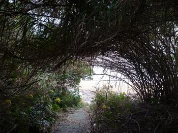 P1190535ヨシのトンネルの先に浜が見える.JPG