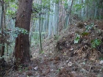 P1190641竹林沿いの踏み跡.JPG