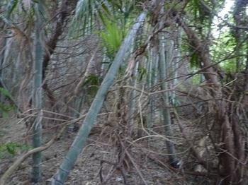 P1190642竹林境の尾根.JPG