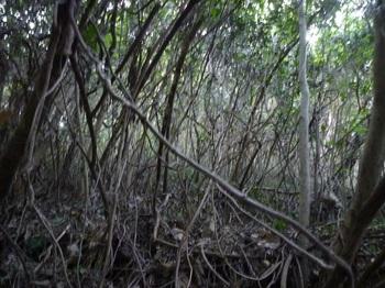 P1190646上方の雑木疎林.JPG