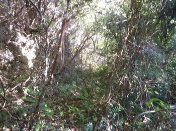 P1190722灌木が茂る.JPG