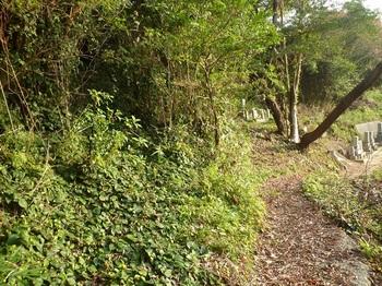 P1190799墓地上の尾根へ向かう山道(ツタ類がはびこる).JPG