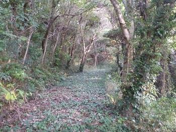 P1190812コンクリート林道.JPG