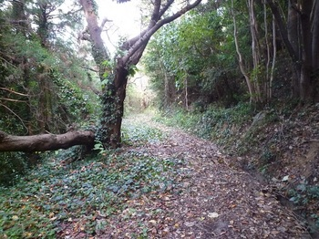 P1190814落ち葉やツルに覆われた干そう道路.JPG