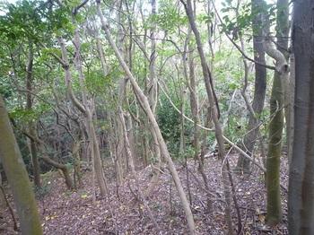 P1190842尾根左の疎林を下る.JPG