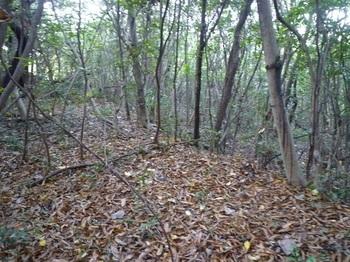 P1200205段々畑跡の疎林.JPG