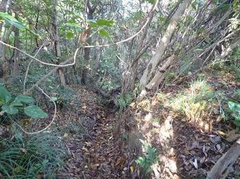P1200223谷へ下る荒れ山道.JPG
