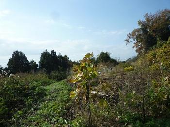 P1200224耕作地.JPG