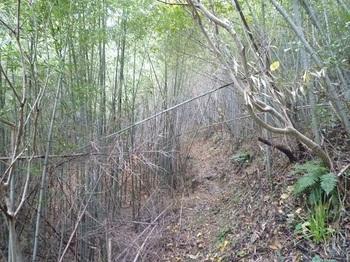 P1200263竹林沿い.JPG