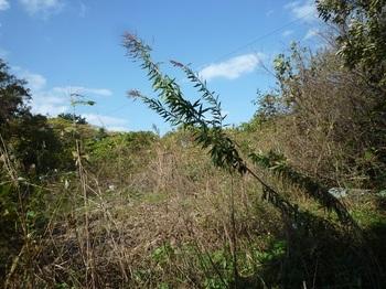 P1200330荒れた耕作地跡.JPG