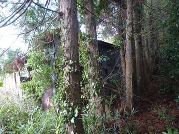 P1200622右のスギ並木沿いの作業小屋.JPG