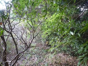 P1200633果樹園跡境.JPG