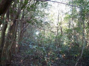 P1200649雑木並木沿い.JPG
