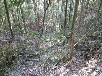 P1200704谷側の竹林に踏み跡.JPG