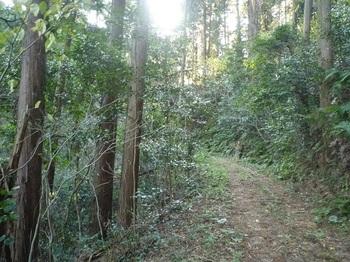 P1200769植林.JPG
