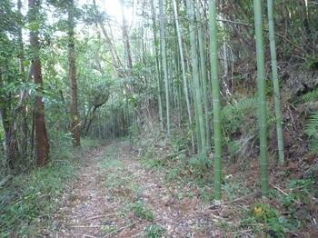 P1200804作業道分岐(右の竹林へ).JPG