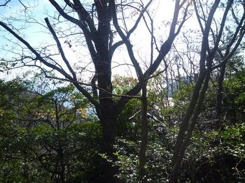 P1210009牛ヶ首方向の樹間展望.JPG
