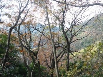 P1210067樹間に伊崎山.JPG