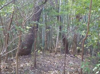 P1210088竹林が現われる.JPG