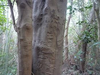 P1210139大木の落書き.JPG