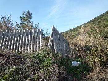 P1210158防風林の北端取り付き.JPG