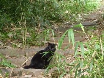 P1210174ガンキ上で待つ猫.JPG