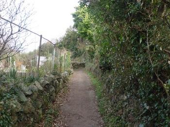 P1210185石垣沿い.JPG