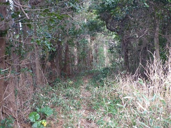 P1210204スギ並木沿いの山道.JPG