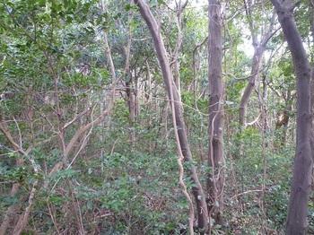 P1210209持山の雑木疎林帯.JPG