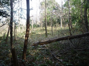 P1210233雑木疎林で行き止まり.JPG