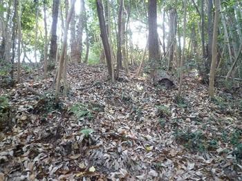 P1210525落ち葉の積もる山道.JPG
