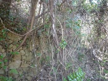 P1210538石垣沿いの段上.JPG