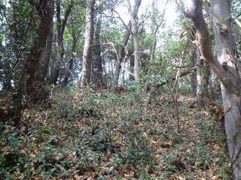 P1210540雑木疎林斜面.JPG
