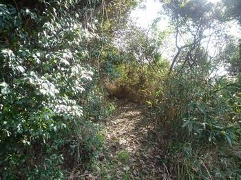 P1210575落ち葉が積もる農道.JPG
