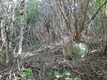 P1210577尾根上部の疎林斜面.JPG