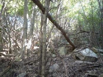 P1210578石が散在する疎林斜面.JPG