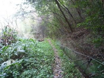 P1210749水路沿いの山道.JPG