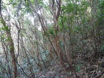 P1210842雑木疎林斜面.JPG