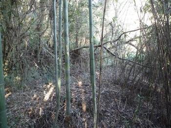 P1210893段々畑跡の平坦地.JPG