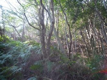 P1210945右疎林斜面へ逃げ込みながら登る.JPG
