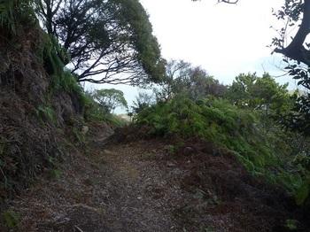 P1220001シダが刈られた登山道.JPG