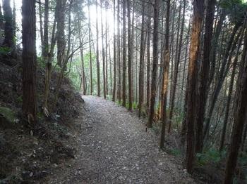 P1220017植林沿い.JPG