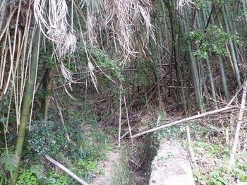 P1220055荒れた竹林の谷.JPG