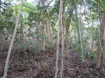 P1220074竹が少なくなる.JPG