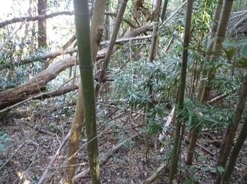 P1220125竹が少なくなる.JPG