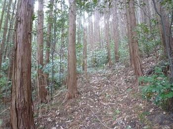 P1220229植林谷の山道.JPG
