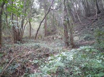 P1220230植林が終る.JPG