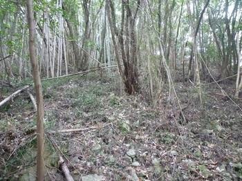 P1220232竹林境の斜面を登る.JPG